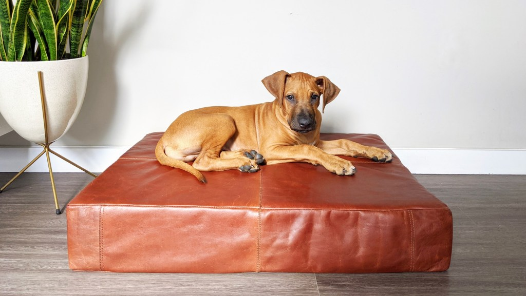 Bowie, Le Dog, Healthy Living + Travel