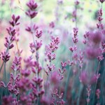 50 Ways To Use Lavender