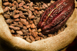 Cocao Fruit and Beans