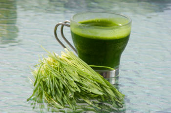 Cup of Fresh Wheatgrass Juice