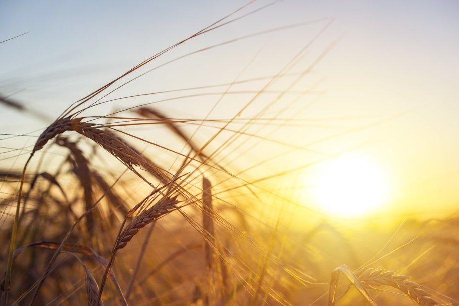 Het belang van voldoende zonlicht   Alles over vitamine D