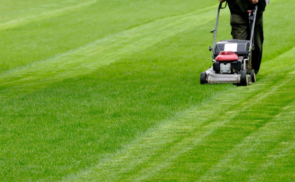 Lawn Cutting