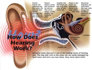 How your hearing works and why exposure to noise levels