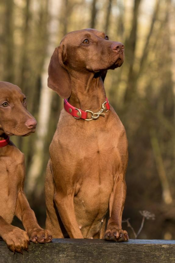 What Are the Best LED Dog Collar?
