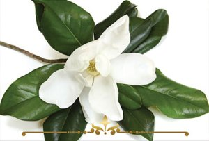 Magnolia Scented Candles