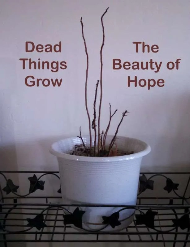Dead houseplant with the caption Dead Things Grow: the beauty of hope