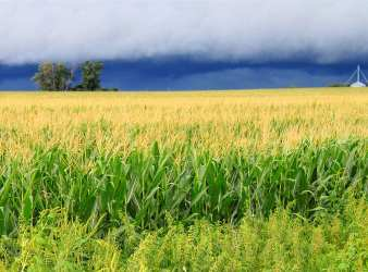 Illinois farmers
