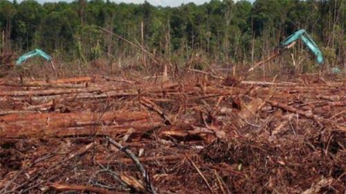 "Clearing in the PT. Adindo Hutani Lestari (AHL) Sesayap Sector concession. Photo taken by GAPETA Borneo, an EoF partner, at 3°33'21.7948""N, 117°4'25.8401""E on 19 April 2014."