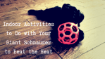 Indoor Activities to Do with Your Giant Schnauzer to Beat the Heat