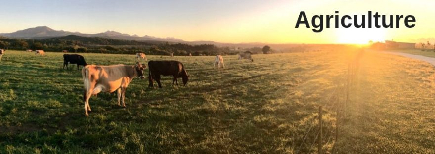 Sunrise over a paddock containing cows