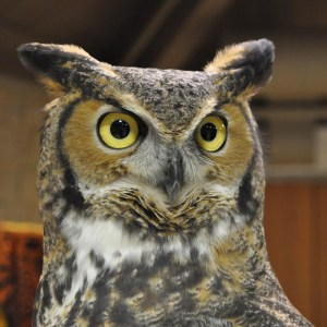 Owl 1K SQ