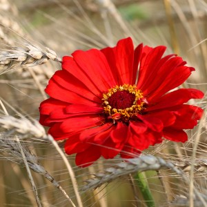 bright-flower