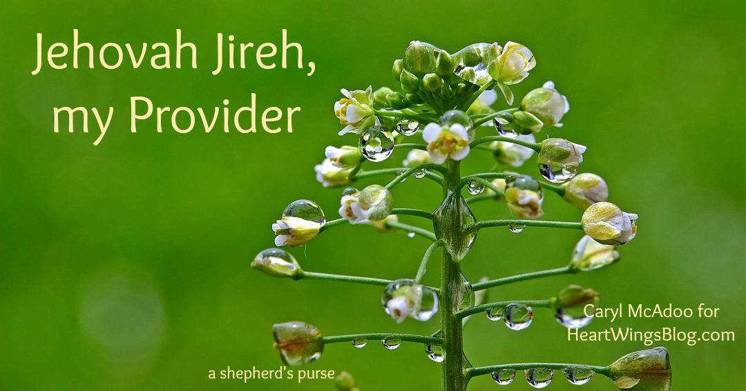 Jehovah Jireh, My Provider