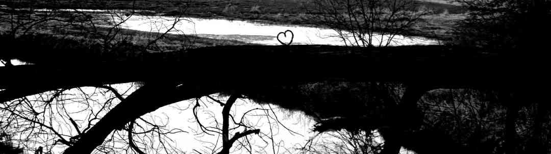 Fallen tree with heart shape