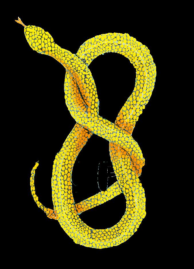 Arlo Knott snake