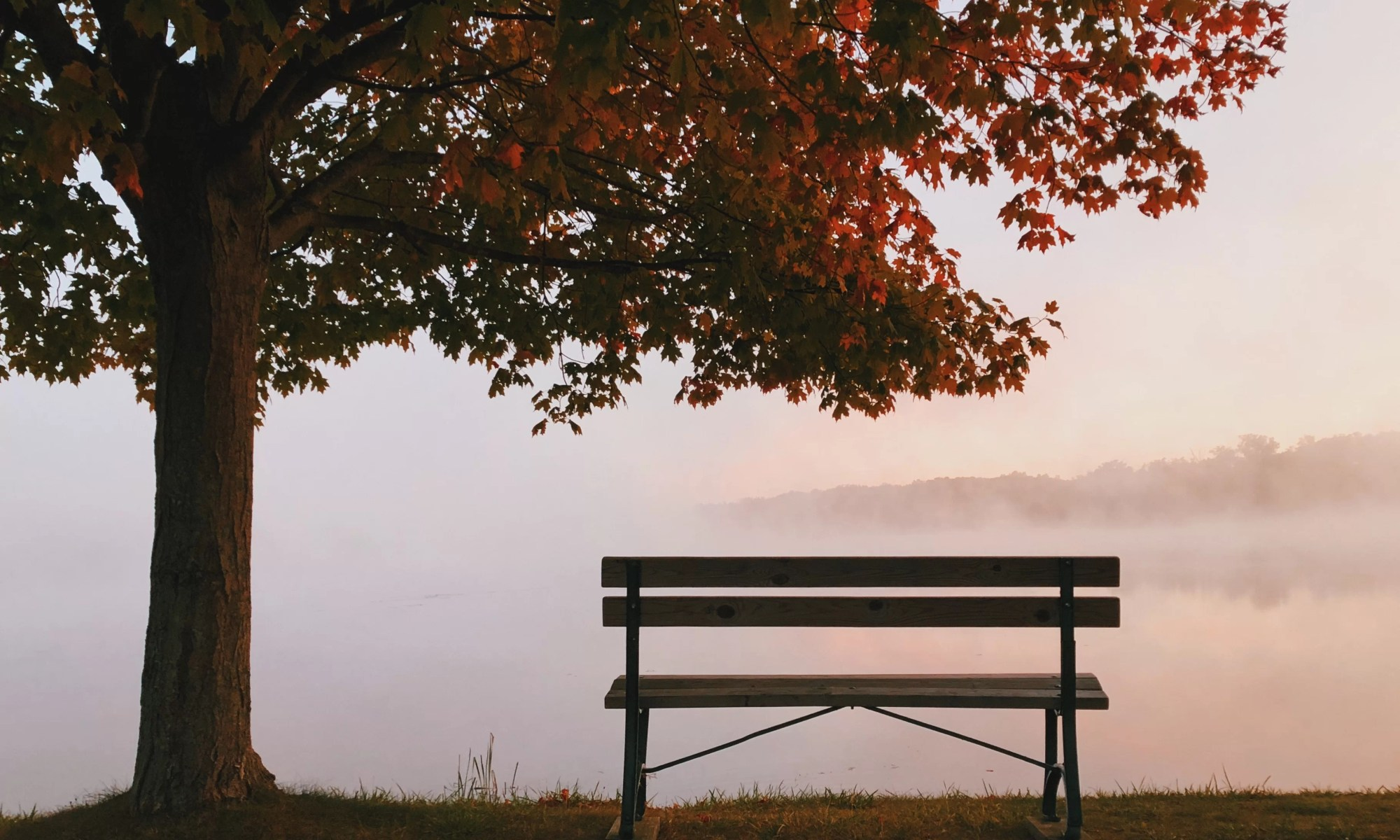 A bench by a tree in autumn