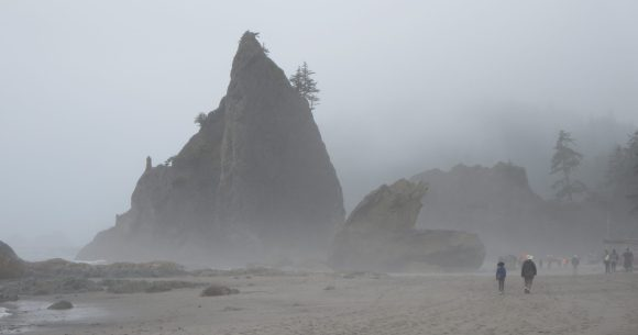 The WA state coast in morning fog