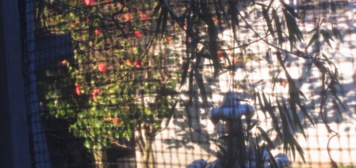 MORNING SON REFLECTED ON COURTYARD WALL VIEW FROM MY BEDROOM