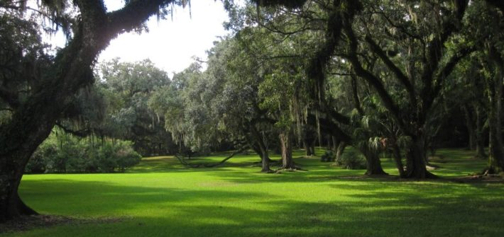 AVERY ISLAND OAK GROVE