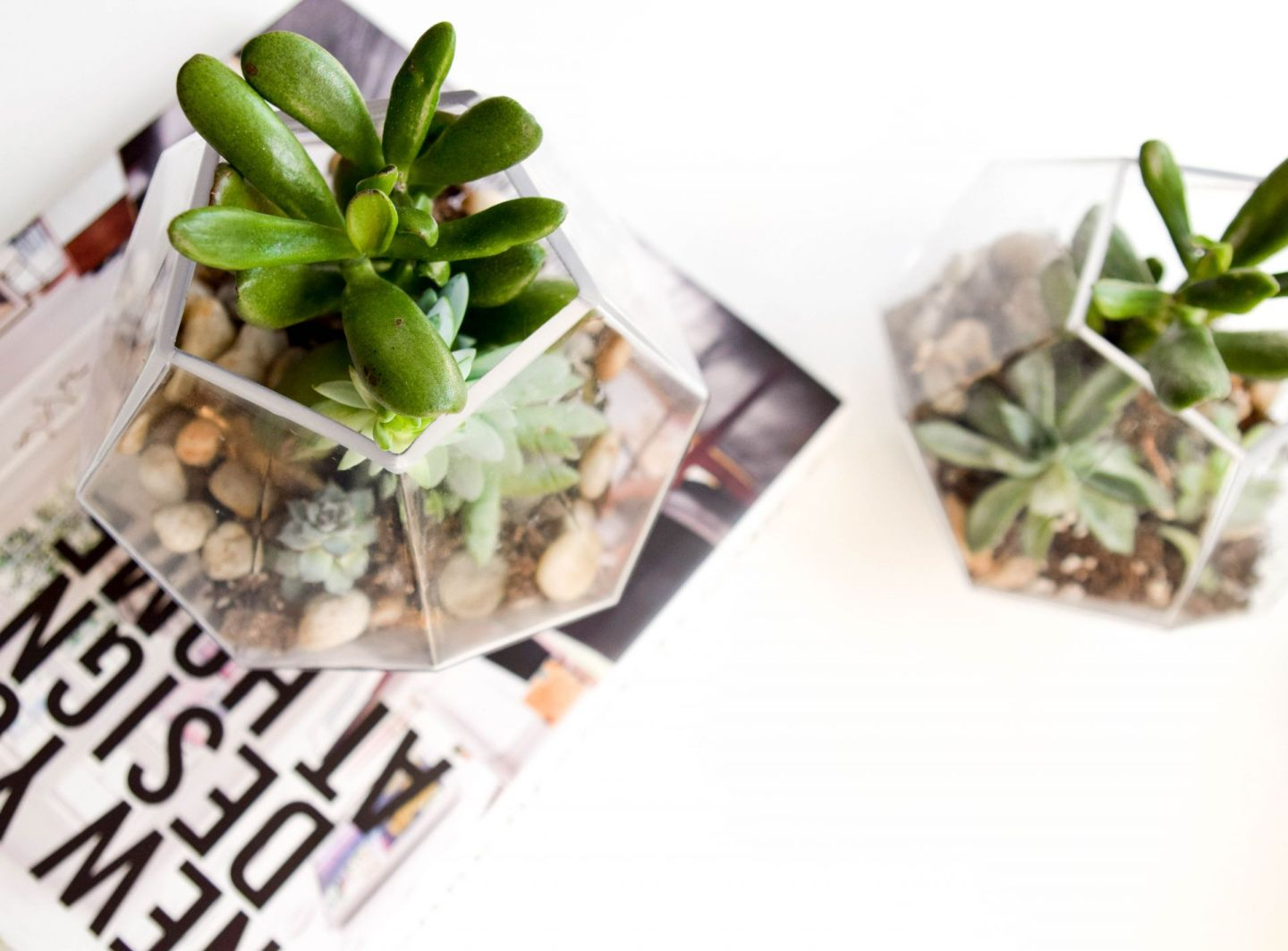 tricks to keep succulents alive