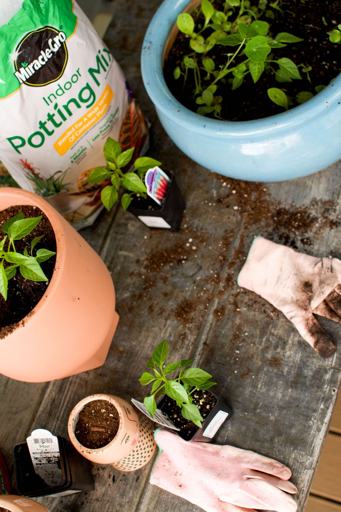 where to find outdoor garden plants in dc - plant stores dc