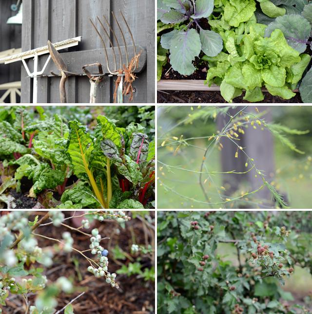 P. Allen Smith's Moss Mountain Farm // Arkansas Women Bloggers // Arkansas Soybean Promotion Board #Bean2Blog