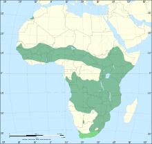Serval range