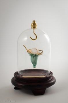 Persephonus alba