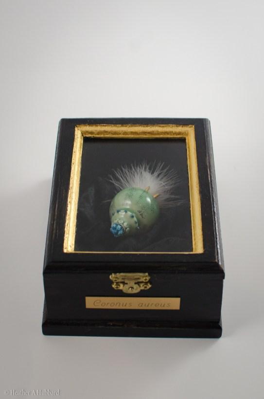 Coronus aureus