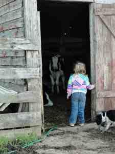 ava and calves