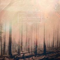 If These Trees Could Talk – Red Forest