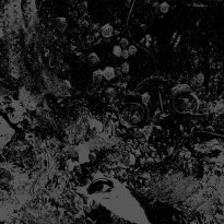 Primitive Man & Unearthly Trance – Split