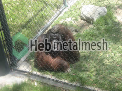 stainless steel mesh for Ape exhibit, Ape enclosures, Ape cage