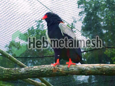 eagle cover mesh, eagle fencing, ealge safety netting for sale