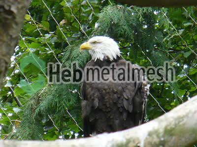eagle exhibit fence manufactruer, eagle enclosure mesh, eagle cage mesh
