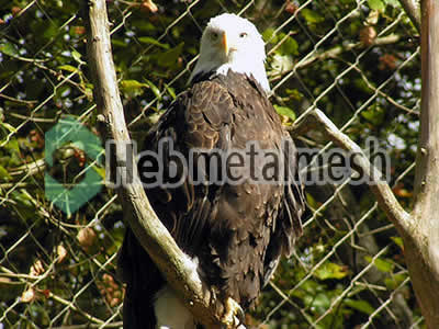 zoo mesh facotry for eagle exhibit, eagle cages mesh, eagle fencing wholesaler