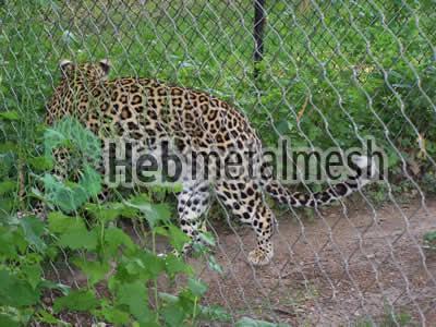 leopard exhibit fence manufacturer, leopard enclosure mesh, leopard cage mesh