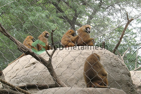 wire rope mesh suppliers – monkey mesh, monkey fence, monkey netting, monkey cage fence, monkey enclosure fencing, monkey safety mesh