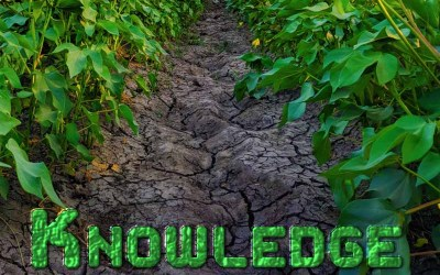 29th January 2021: Our Daily deLIGHT~6th Day-Knowledge