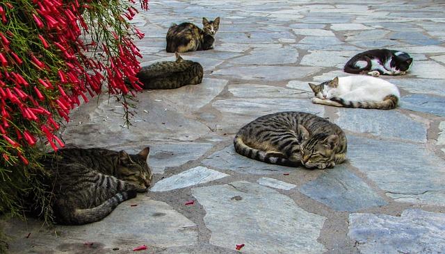 cats-1555962_640