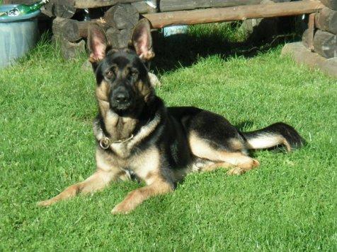Tyson 6 månader