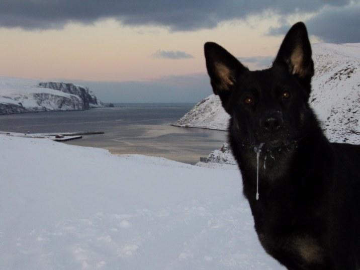 201011 Kjöllefjord hundpromenader (13)_1024x768