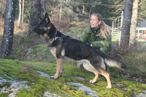 Hedeforsens Åxanna med sin förare Matilda Thonander