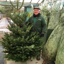 Great Prices Nordman Fir Christmas Trees