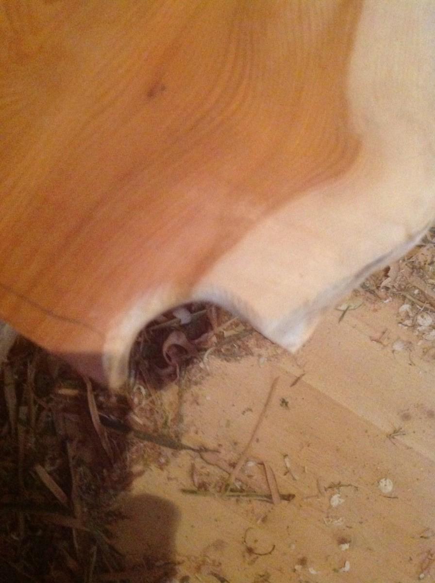 Jason-Robards-Hedgerow-Crafts-Childs-Greenwood-Chair-Handmade-Hazel-Elm