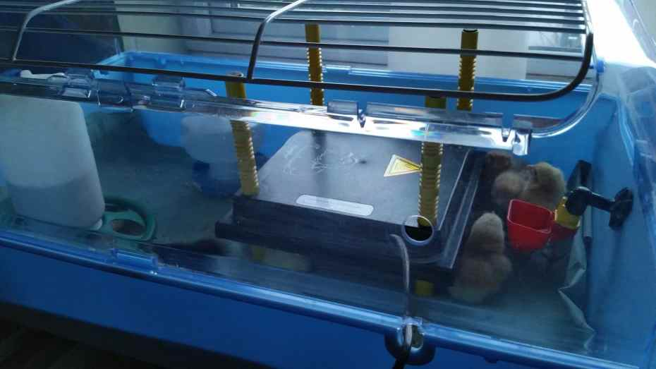 Chick brooder hire equipment