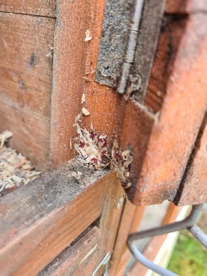 Red mite clusters round door