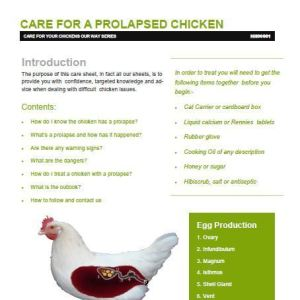 Prolapse care for chickens