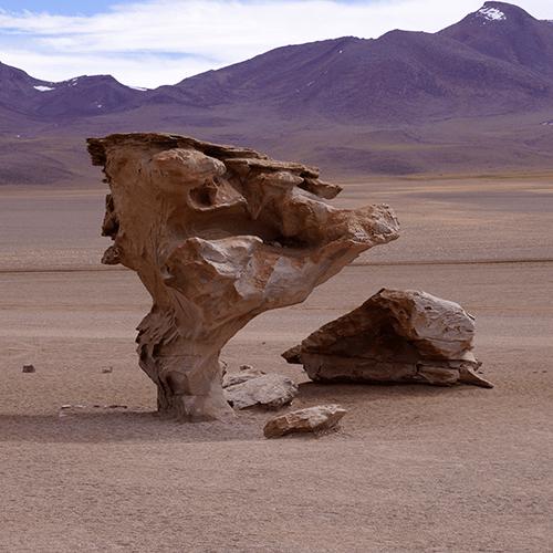 Bolivie - Désert Siloli / Arbre de pierre