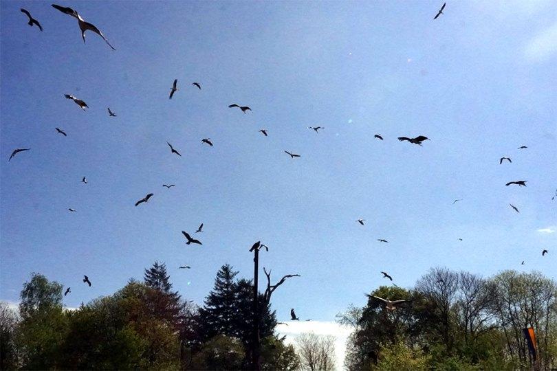 Puy Du Fou - Le Bal Des Oiseaux Fantômes